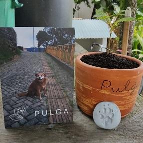 En recuerdo a  Pulga